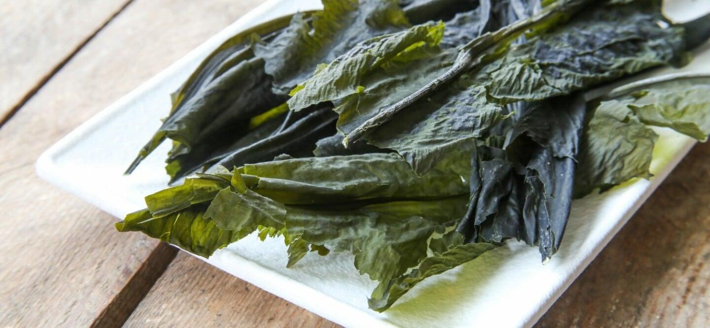 winged kelp