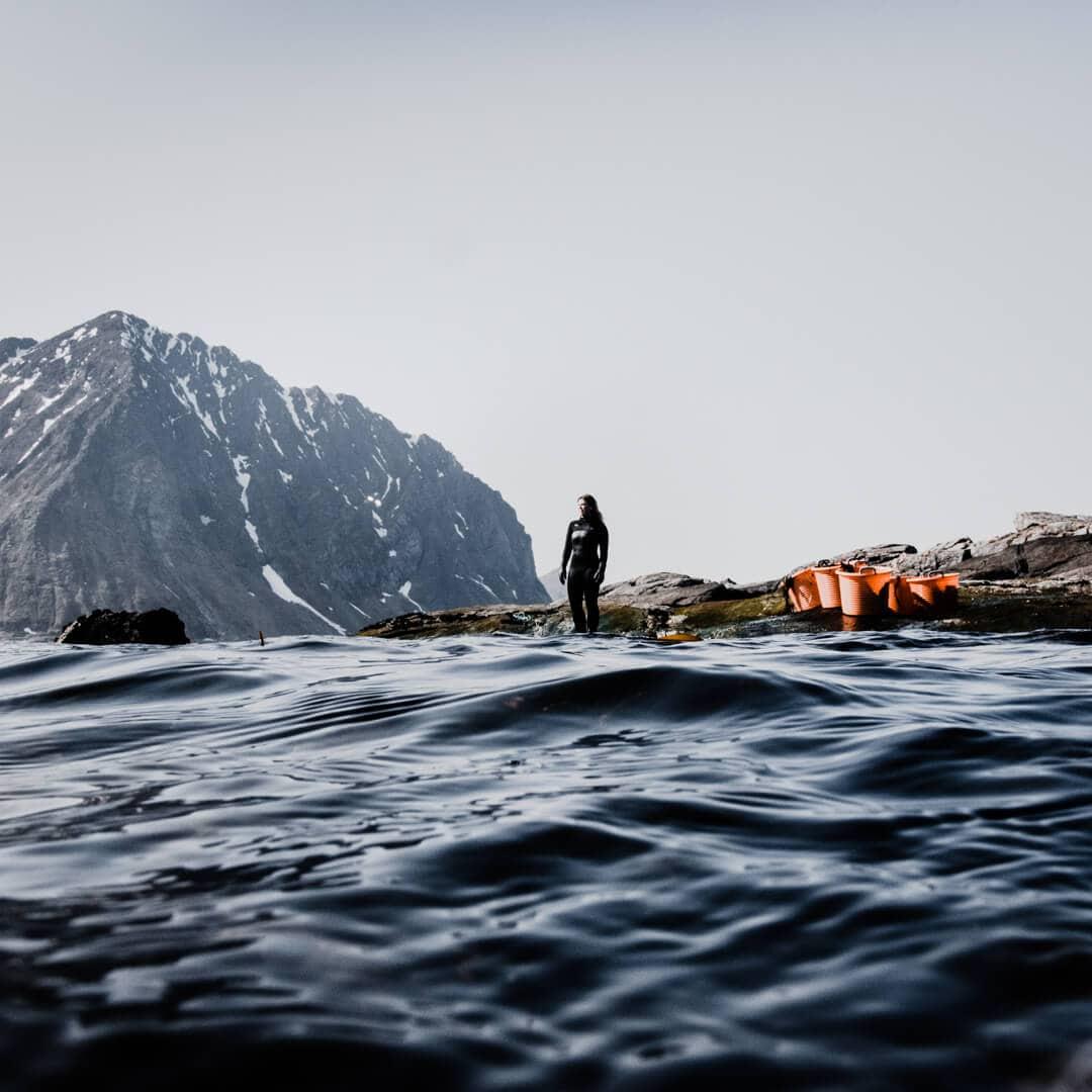 Lofoten Seaweed-contest